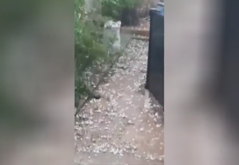 WATCH: Southern Spain bashed by golfball-size hailstones, flash floods triggered