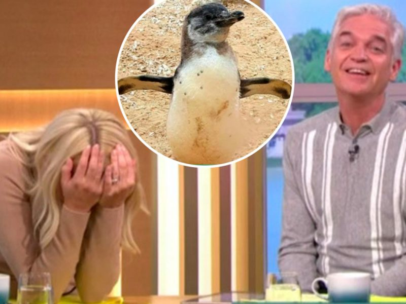 Holly Willoughby can't cease laughing as child penguin known as Squirt will get a gender reveal social gathering stay on This Morning